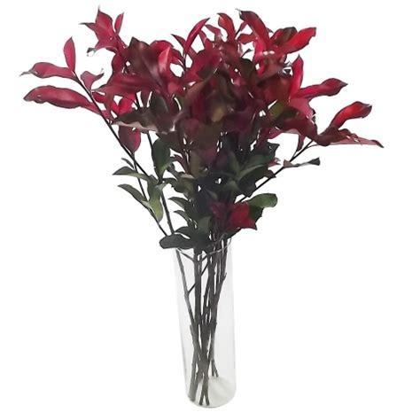 photinia in vaso fot 237 nia vermelha em ma 231 o vaso n 227 o incluso uemura flores