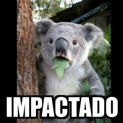 Koala Meme Generator - meme koala impactado 17397345