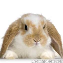 floppy eared bunny myconfinedspace