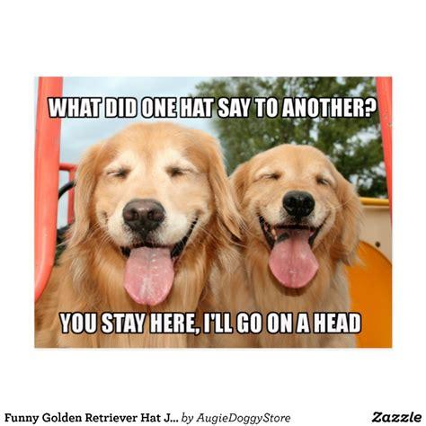 golden retriever jokes golden retriever hat joke meme postcard zazzle