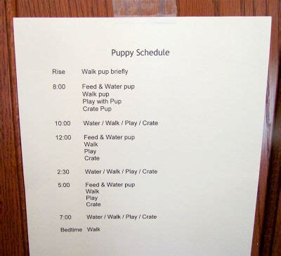 8 week puppy crate best 20 puppy schedule ideas on puppy care potty dogs and