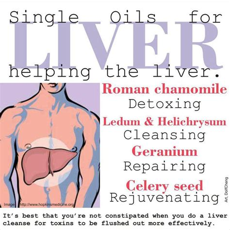 Liver Detox And Anger by 54 Best Images About Liver Lymph Essential Oils On