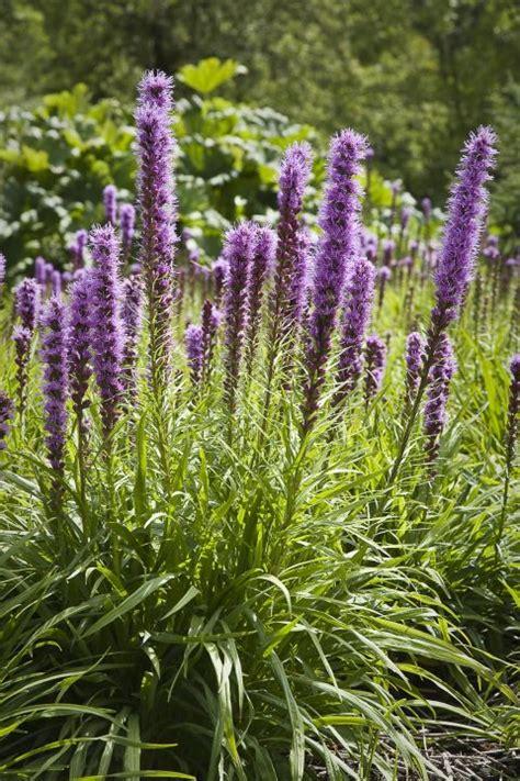 heat tolerant plants   survive  thrive