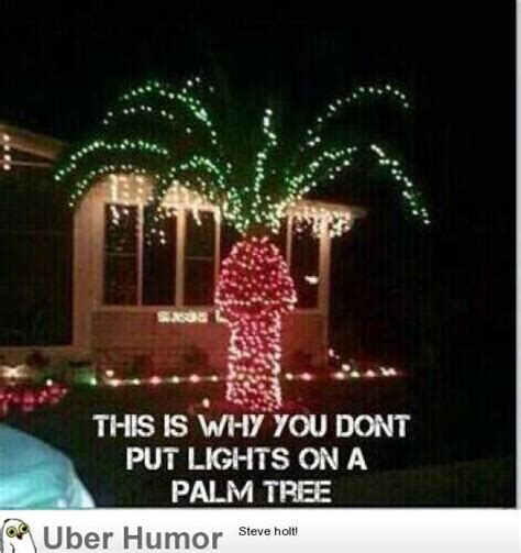 Christmas Lights Meme - so this is why you don t put lights on a palm tree funny