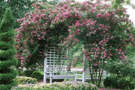ideas for climbing rose supports garden design ideas with climbing roses