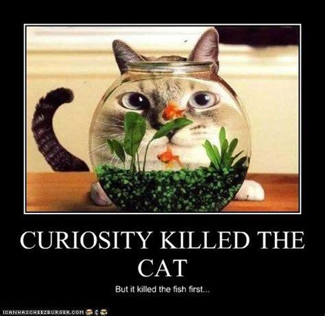 curiosity killed the cat quotes. quotesgram