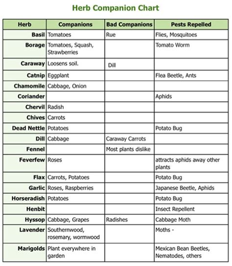 herb care chart herb planting chart 28 images herb planting and