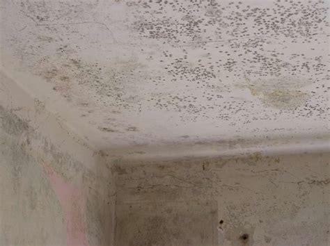 schimmel im mauerwerk bekämpfen schimmel im badezimmer decke hausdekorationen und