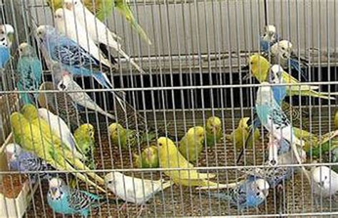 fiere animali da cortile roncade 50 170 fiera dei osei fiera degli uccelli mostra