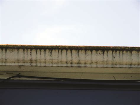 tiger gutters and siding gutter problems here are some solutions