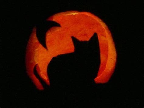 cat pumpkin carving ideas  halloween catster
