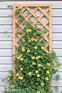 Climbing Vines For Trellis Trellis For Climbing Plants Backyard Ideas