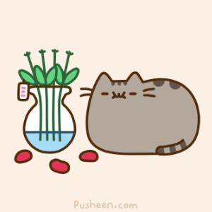 pusheen cat gif find on giphy