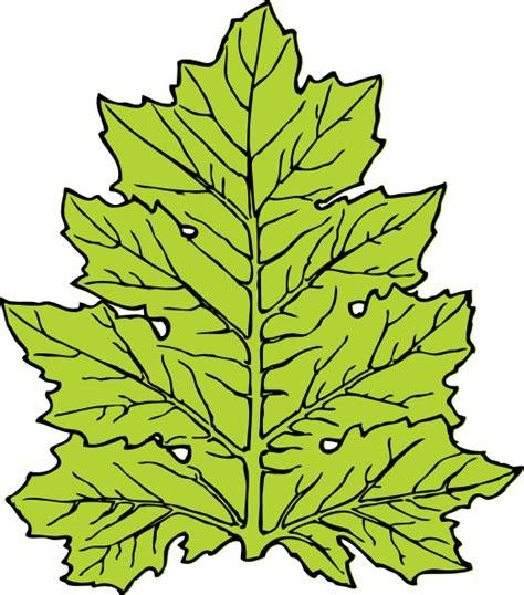 leaf clip art at clker com vector clip art online acanthus leaf clip art at clker com vector clip art