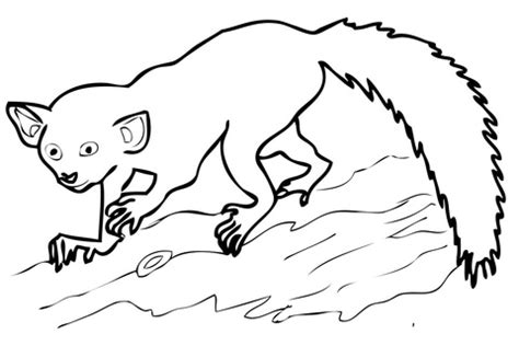 mouse lemur coloring page 301 moved permanently