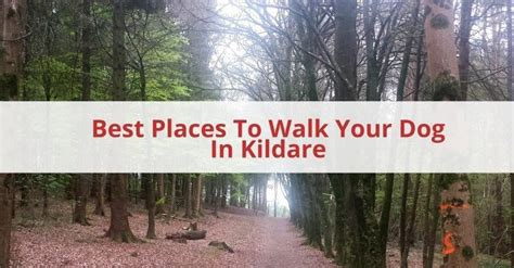 best place to find puppies best places to walk your in kildare