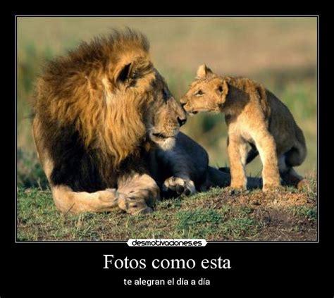 imagenes de leones juntos para perfil whatsapp usuario ivanstj desmotivaciones