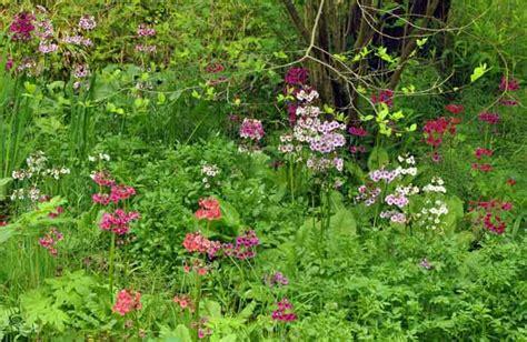 fernwood botanical gardens fernwood botanical garden rotary botanical gardens hort