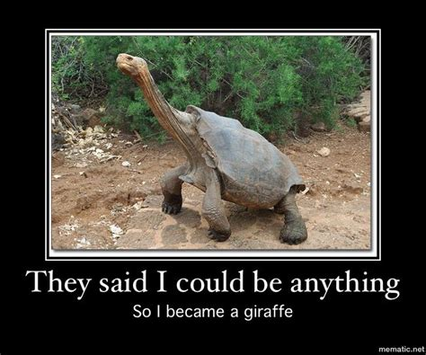 Tortoise Meme - turtle meme tortoises pinterest turtle meme