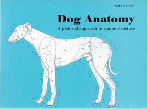 anatomy and physiology coloring workbook answers page 192 wxicof books