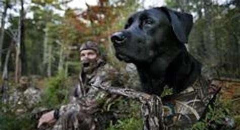 best duck dogs best dogs for duck and waterfowl nomad outdoor