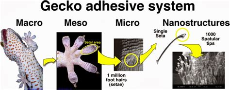 0007179898 the gecko s foot how scientists biomimicry design inspired by nature gecko feet