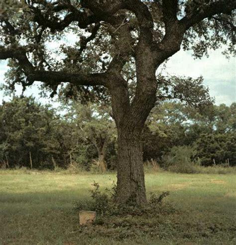 kyle hanging tree 1969