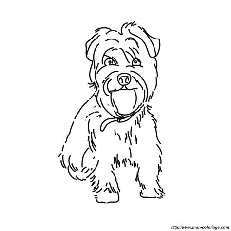 yorkie poo coloring pages coloring pages