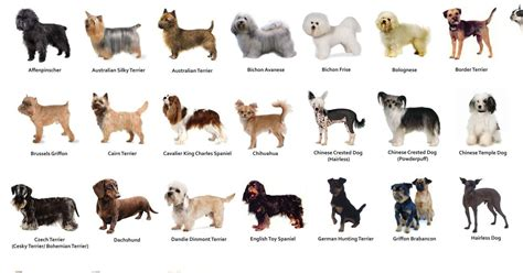 s breeds things to consider when choosing your s breed
