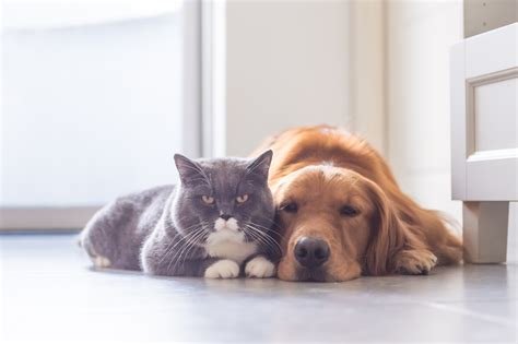 are dogs smarter than cats wbir are dogs smarter than cats yes and science proves it