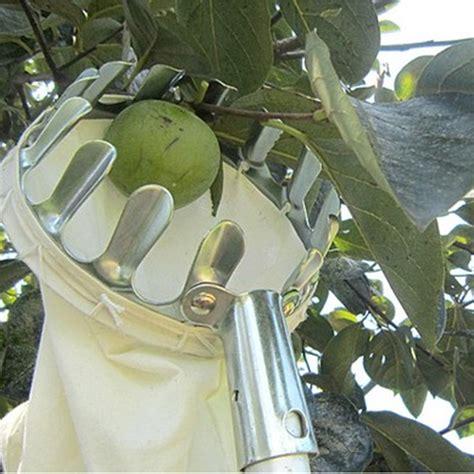 Gardener S Supply Apple Picker Convenient Practical Horticultural Fruit Picker Gardening