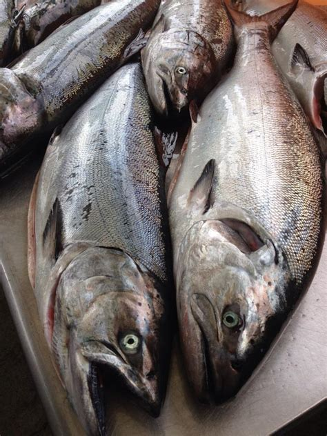 Order By Wa by This Week S Seafood Order King Salmon Neah Bay Wa