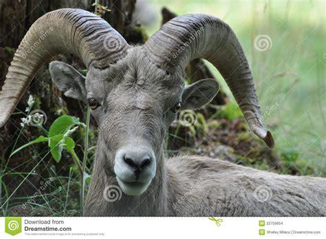 yung ram ram stock images image 22759654