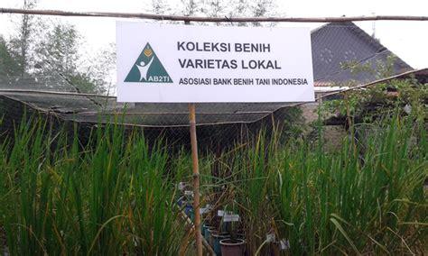Bibit Padi Rojolele kedaulatan pangan misi yang belum menyentuh harkat petani mongabay co id