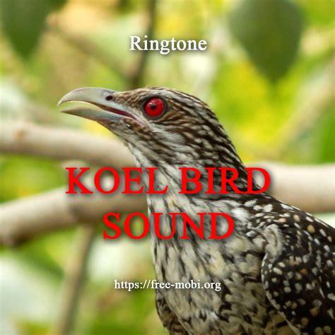 ringtone koyal song asian koel sound