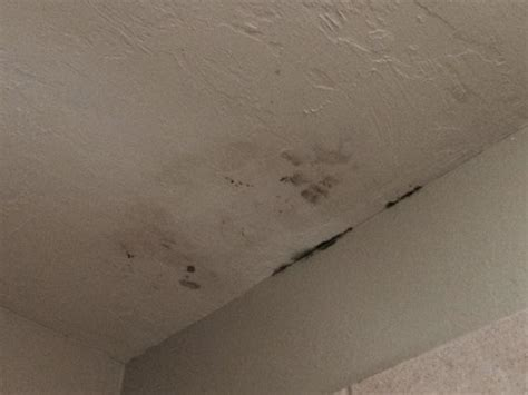 black mold on ceiling in bathroom checking in the hotel picture of staybridge suites