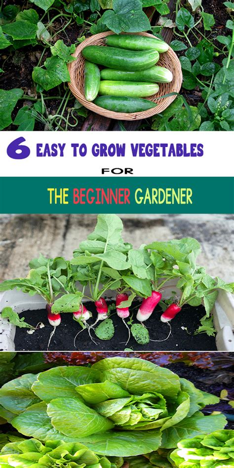 vegetable gardening how to grow vegetables the easy way books 6 easy to grow vegetables for the beginner gardener