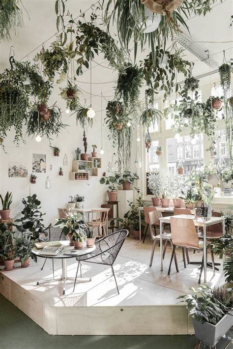 interior garden plants 25 best ideas about indoor hanging plants on