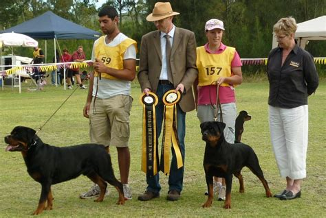 rottweiler club rottweiler club wales dogs our friends photo