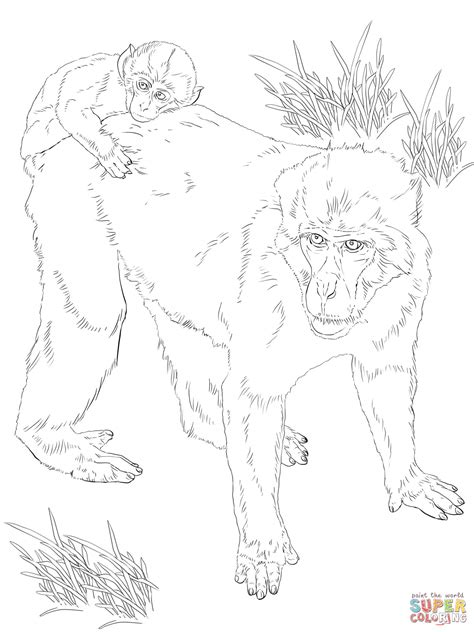 rhesus monkey coloring page macaque coloring download macaque coloring