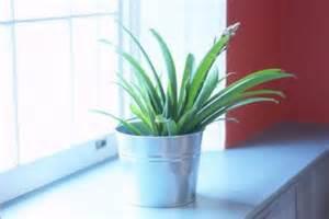 do plants grow better with sunlight or artificial light