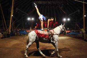 4 equestrian acts 10 of the most dangerous circus acts