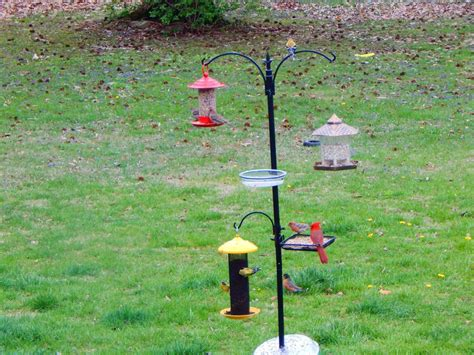 backyard bird feeding backyard bird feeding station fresh gardening ideas