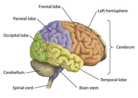 human body  anatomy vocabulary learn english vocabulary