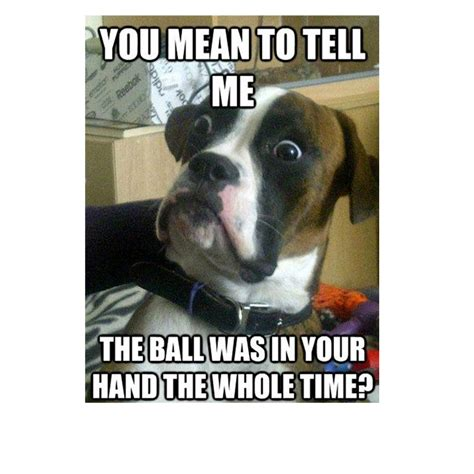 Silly Dog Meme - the funny picture topic page 236 general chat gtaforums