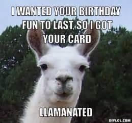Funny Llama Memes - happy birthday funny llama google search llama