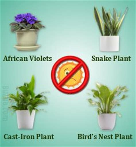 indoor plants that don t need sunlight