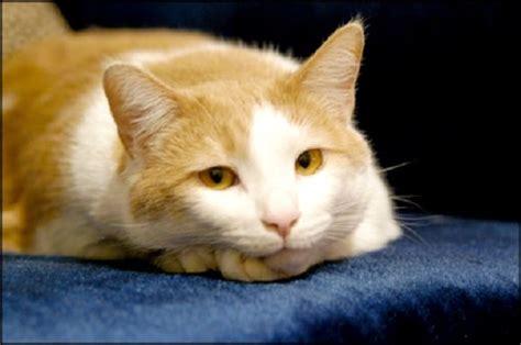 tappezzeria gatti curiosit 224 come eliminare il cattivo odore della pip 236