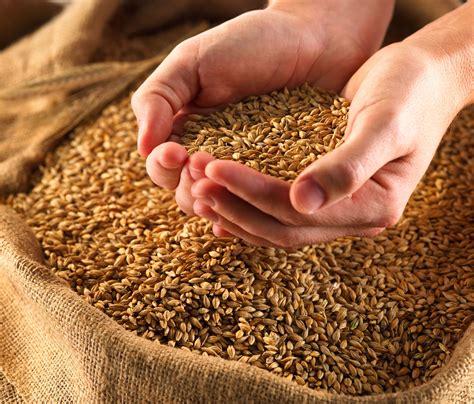whole grains reddit spoilers asoiaf