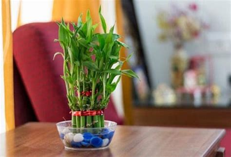 small plants to grow indoors 10 cute small indoor plants small houseplants balcony